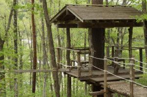 森の小屋の写真